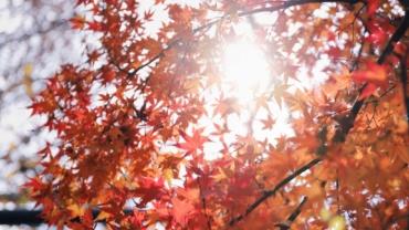 Happy in de herfst